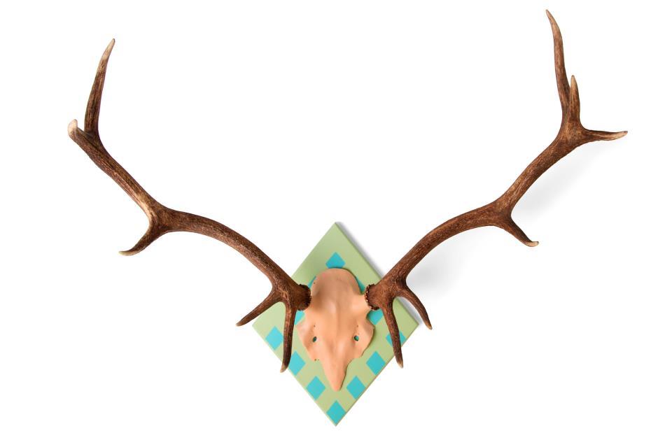 Fique a conhecer os criadores da My Deer