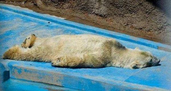 Urso mais triste do Mundo?